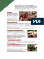 Manual Lombricultura