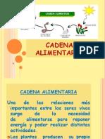 3º básico Ciencias ppt Cadenas alimentarias 08.06