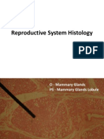 Reproductive System Histology