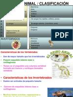 3º Básico Ciencias ppt VERTEBRADOS E INVERTEBRADOS 11.06