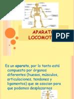 3º básico Ciencias ppt Aparato Locomotor 30.04
