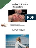 Morfofisiologia Sistema Respiratorio APH