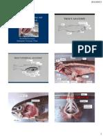 Trout Anatomy