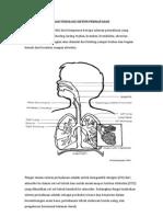 Konsep Anatomi Dan Fisiologi Sistem Pernapasan
