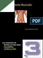 Clase Contraccion Muscular