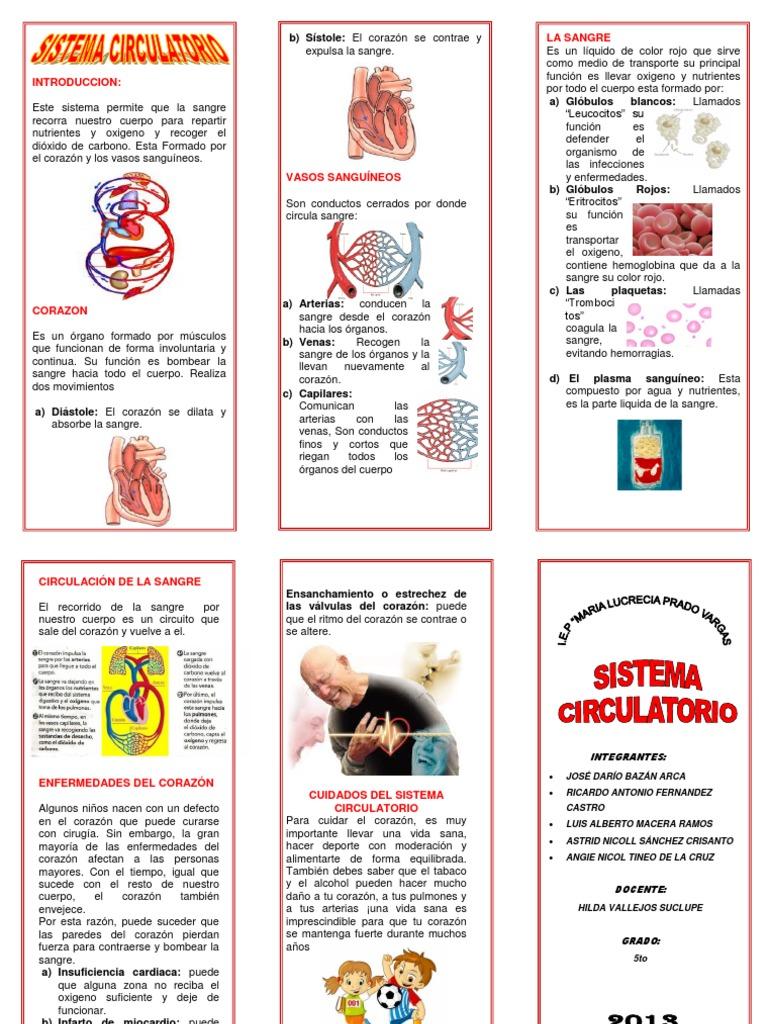 Aparato Circulatorio Word Triptico