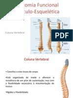 Ossos - Coluna Vertebral