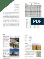 Manual-tecnico-cultivo-de-quinua-organica.pdf