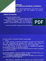 Fisiologia y Alteraciones Palpebrales