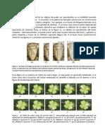Notas Cristalografia