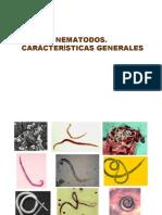 4-nematodos