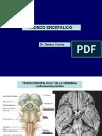 Copia de Tronco- Correa