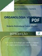 Aula 3 - Organologia - Introdução e raízes  - Botânica Geral