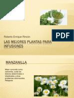 Las Mejores Plantas Para Infusiones