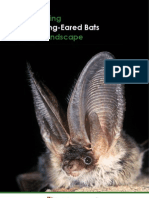 Conserving Grey Long-Eared Bats in our Landscape