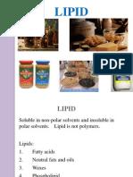 Protein, Dan Lemak