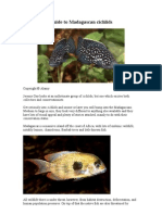 Cichlids From Madagascar
