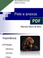3-peleeanexos2011-1-120927151129-phpapp01