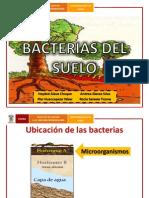Bacterias Del Suelo