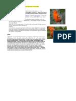 Cordão de Pássaro Galo-da-Serra (pro pazpolo mangueirão).pdf
