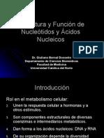 Procesos Biologicos - 07 - Acidos Nucleicos.09.04.09
