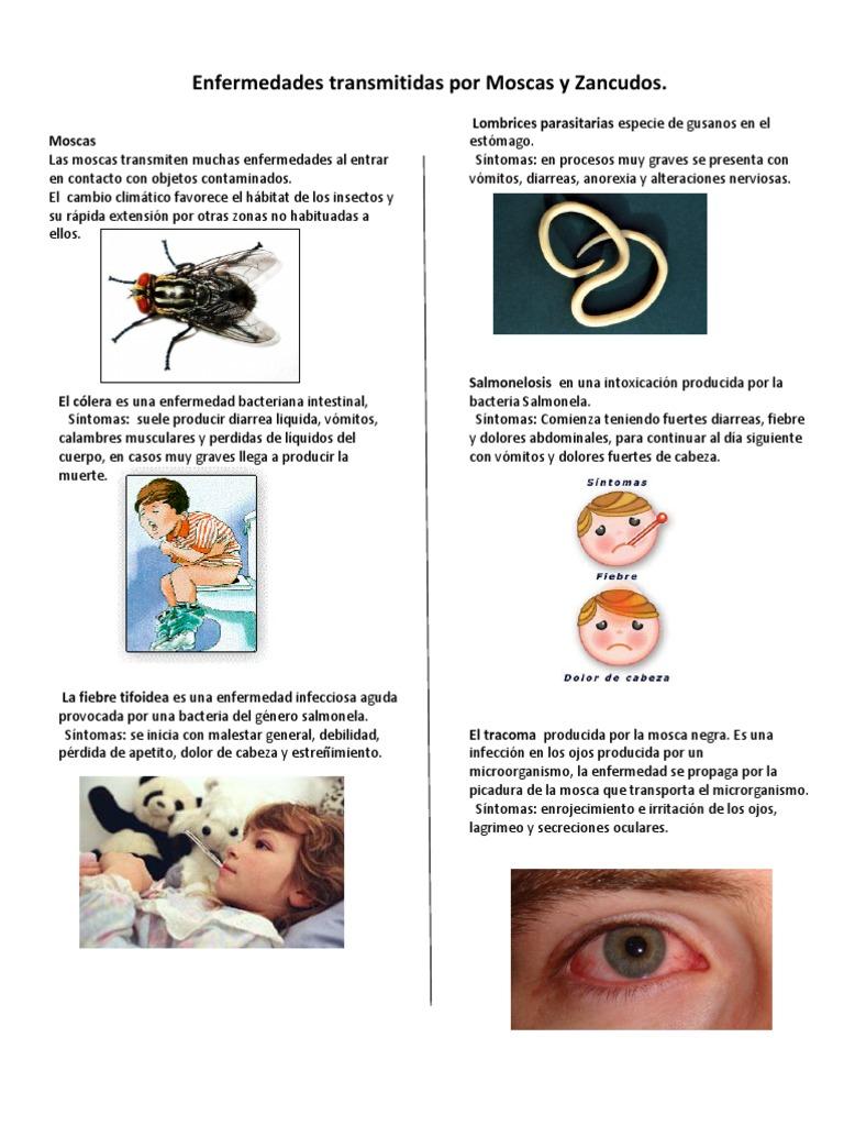 enfermedades causadas por microorganismos y sus síntomas
