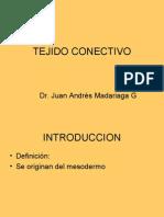 Histologia - 04 - Conectivo.06.04.09