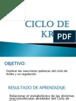 113_ciclo de Krebs