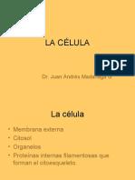 Histologia - 02 - La Celula.23.03.09