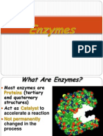 04 Enzymes