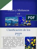 Peces y Moluscos