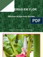Fruteiras Em Flor