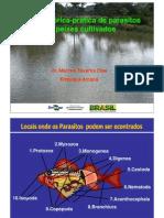 Apresentacao Marcos Tavares Analise Teorica Pratica de Parasitos Em Peixes Cultivados