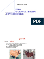 Cattle Breed in India