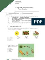 Prueba de Nivel de Ciencias Naturales 4 Basico 1