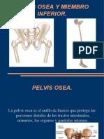 Pelvis Osea y Miembro Inferior.
