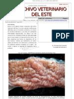 Archivo Veterinario Del Este - 4T_2010
