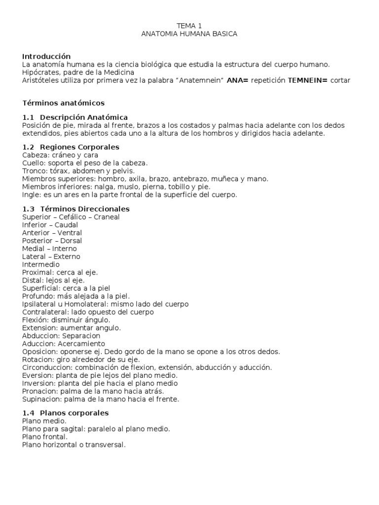 UTO - Anatomia