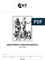 Gabarito Manual Anatomia