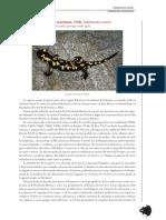 anfibios_4_tcm7-21383.pdf