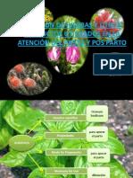Hierbas Medicinales en Obstetricia y Mas