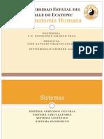 Anatomía Humana I (parte 3)