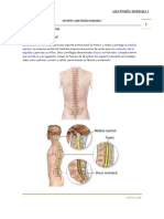 APUNTES ANATOMÍA HUMANA I Osteoarticulaciones