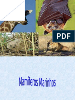 Mamíferos Marinhos