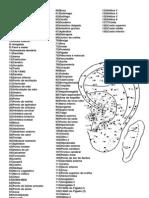Distribuição dos Pontos Auriculares Atlas