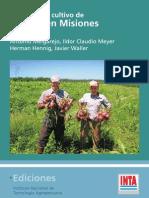 Guía para el cultivo de Cebolla