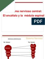 anatomiasistemanervioso-111001131800-phpapp01