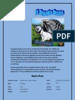 poster del animal en peligro de etincion en Panama