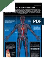 Circulatory Images