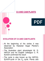 c4 and Cam Plants